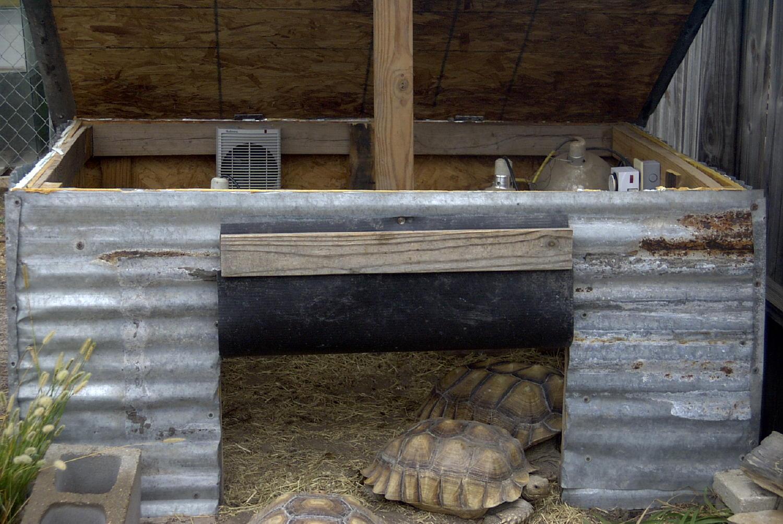 Sulcata Tortoise Housing for Pinterest