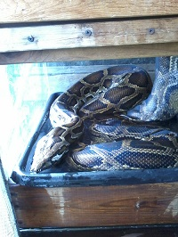 Pythons Photo Album