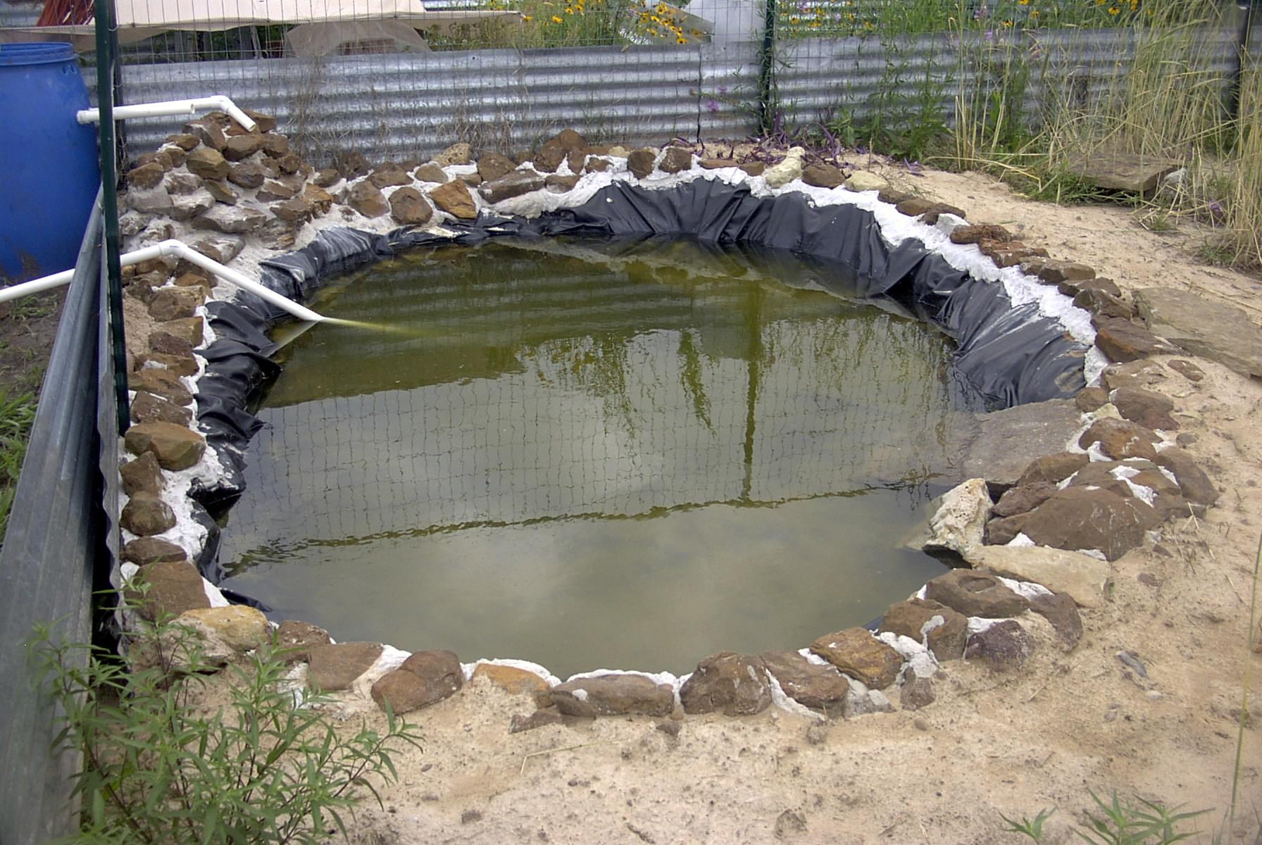 1st Aquatic Turtle Habitat Photo Album Page